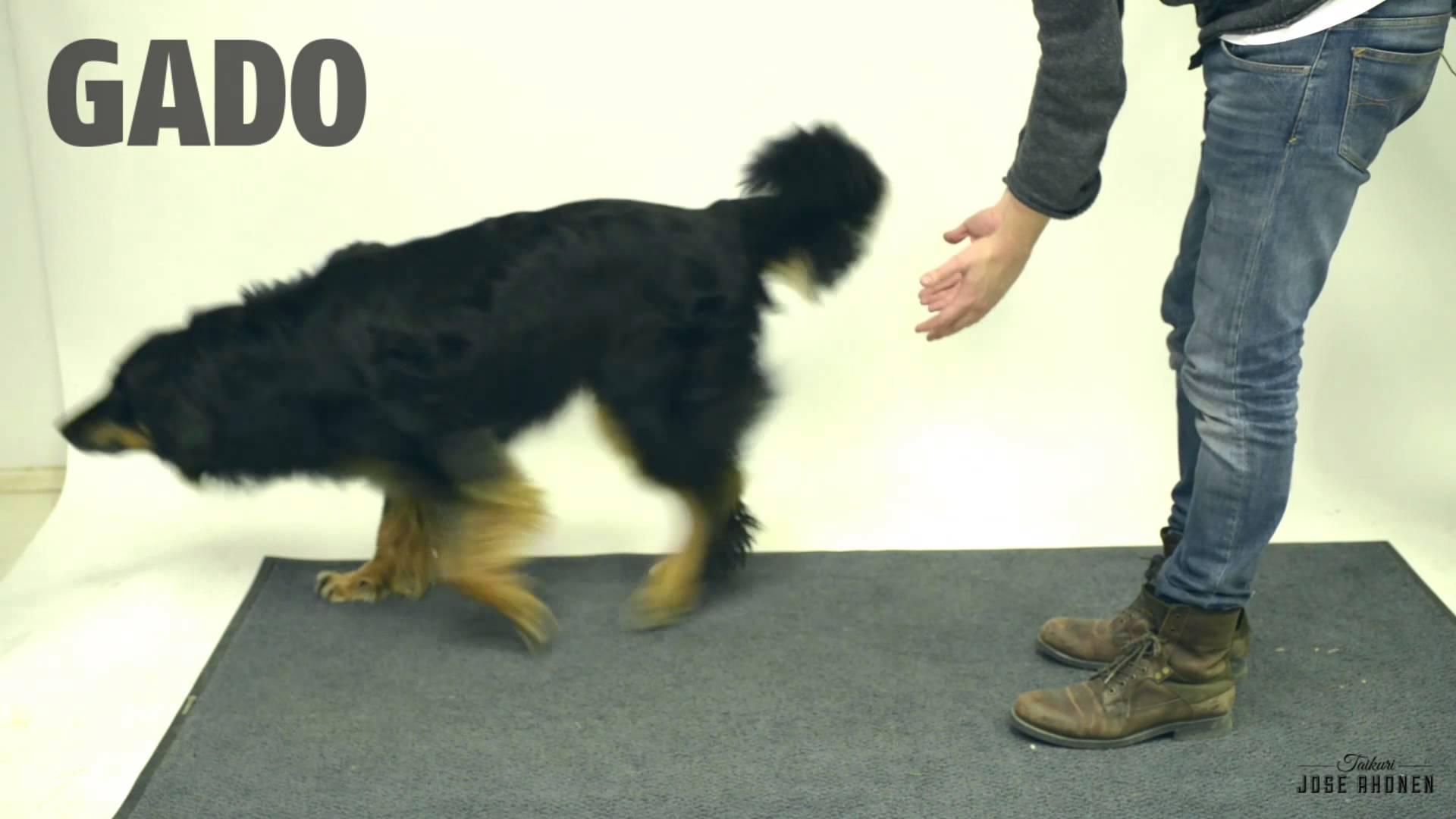 Um truque de mágica para fazer com seu cachorro